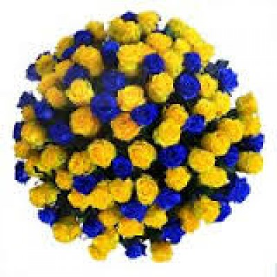 Best madrid flowers blue roses 101 yellow blue roses mightylinksfo