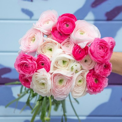 ranunculus-delivery-400x400-38167